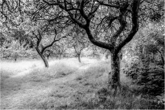 The Orchard, Hidcote Manor - Gloucestershire